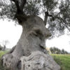 pareidolia-trees-look-like-something-else-